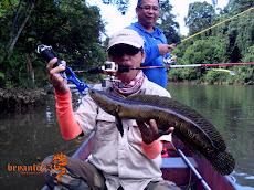 梅花斑纪录鱼