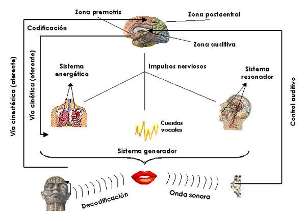 Textos y Resúmenes de Psicología: Mecanismos y base fisiológica del ...