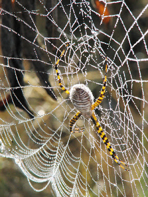 spider in web, by lily b on flickr