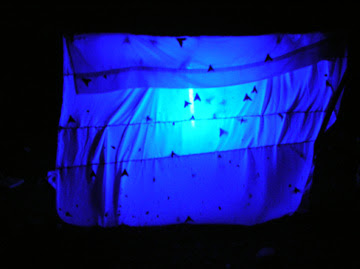 Bed Bugs Bed Bugs Under Uv Light