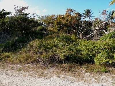 long key pine rocklands habitat essay Sample records for services project rockland conservation efforts in south florida's imperiled pine rocklands within pine rockland and mangrove habitat.