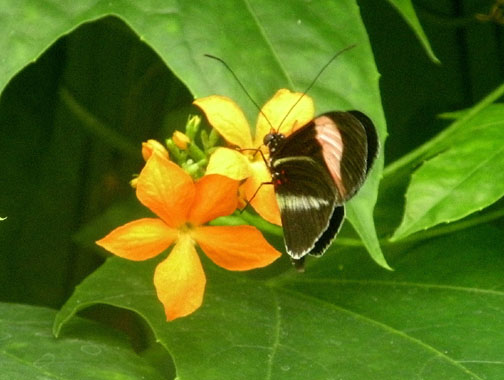 mutualistic relationship of butterfly and flower