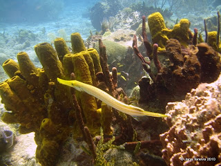 SpongesGardenGuadeloupe Reserve Cousteau