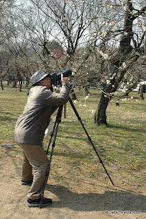 Sakura Kyoto photographer