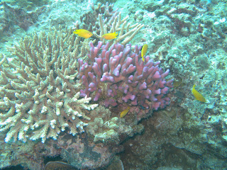Great Barrier Reef underwater