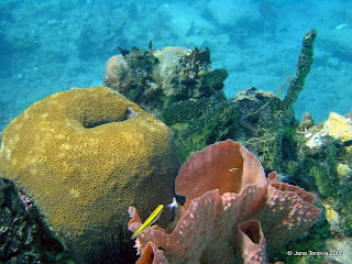 UnderwaterMartinique