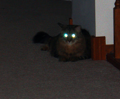 Daisy with Laser Eyes