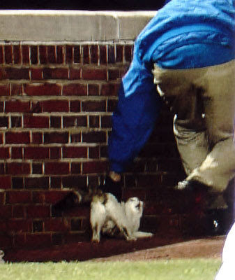 Wrigley Cat Caught