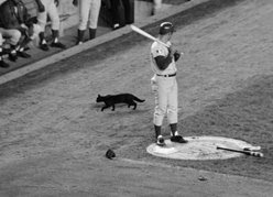 Ron Santo and black cat at Shea