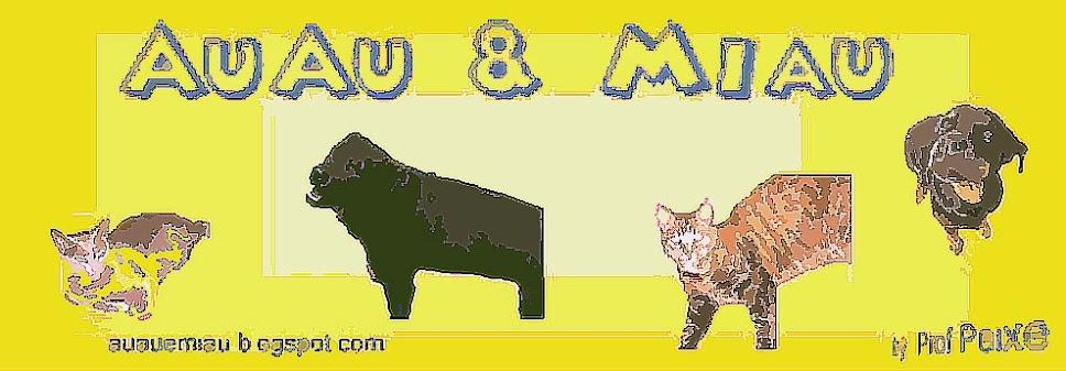 Auau e Miau