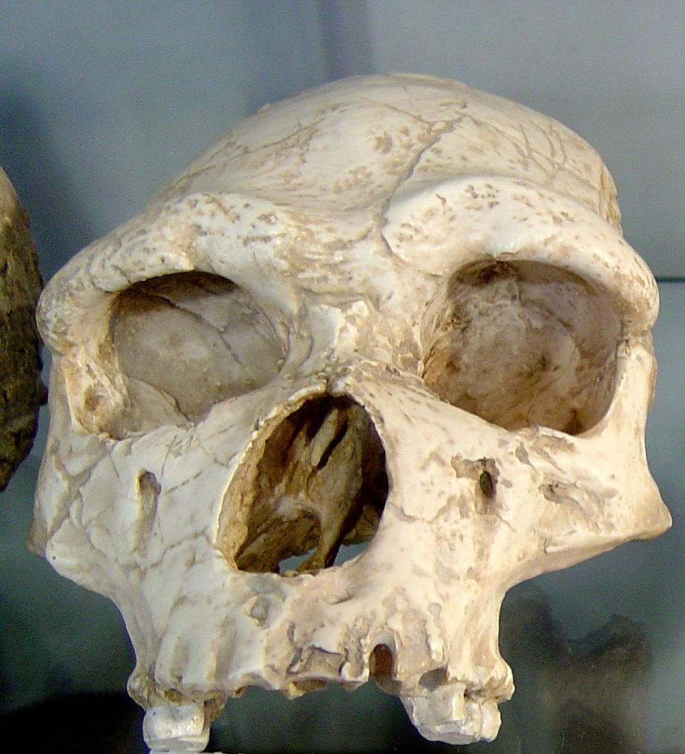 homo erectus The latest tweets from homo erectus (@homoerectial) other side is an illusion.