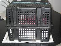 caja separar conejitos