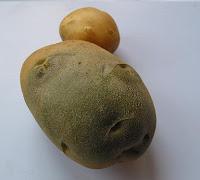 patata con solanina
