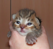 Totallycoastal Kitten