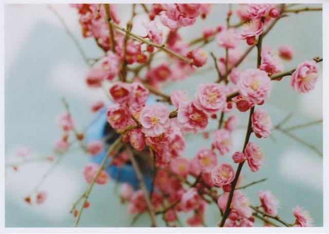 http://3.bp.blogspot.com/_tEarsPAurvc/S9nPEBOjpwI/AAAAAAAAApg/9d8TQHga3z0/s1600/abbyblooms.jpg