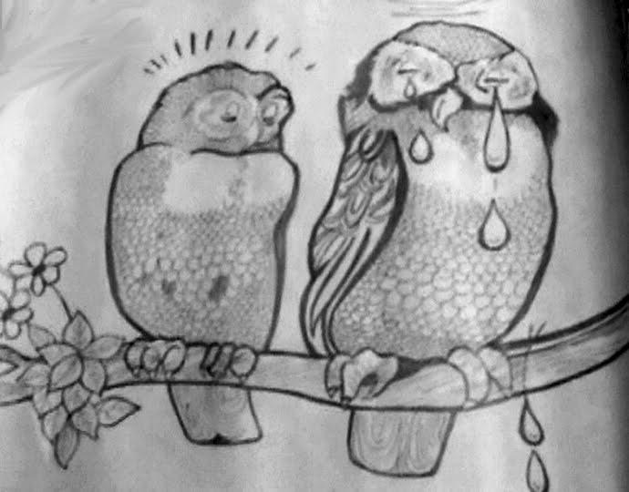 Owl Body Language And Their Body Language