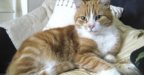 Gambar Gambar Lucu Terbaru Gambar Kucing Lucu
