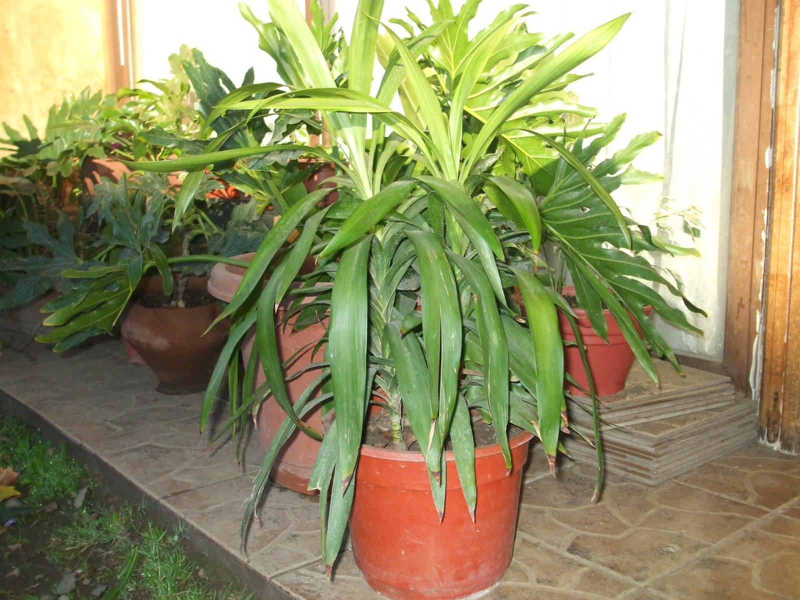Plantas ornamentales plantas de interior - Plantas ornamentales de exterior ...