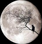 Lua Cheia...