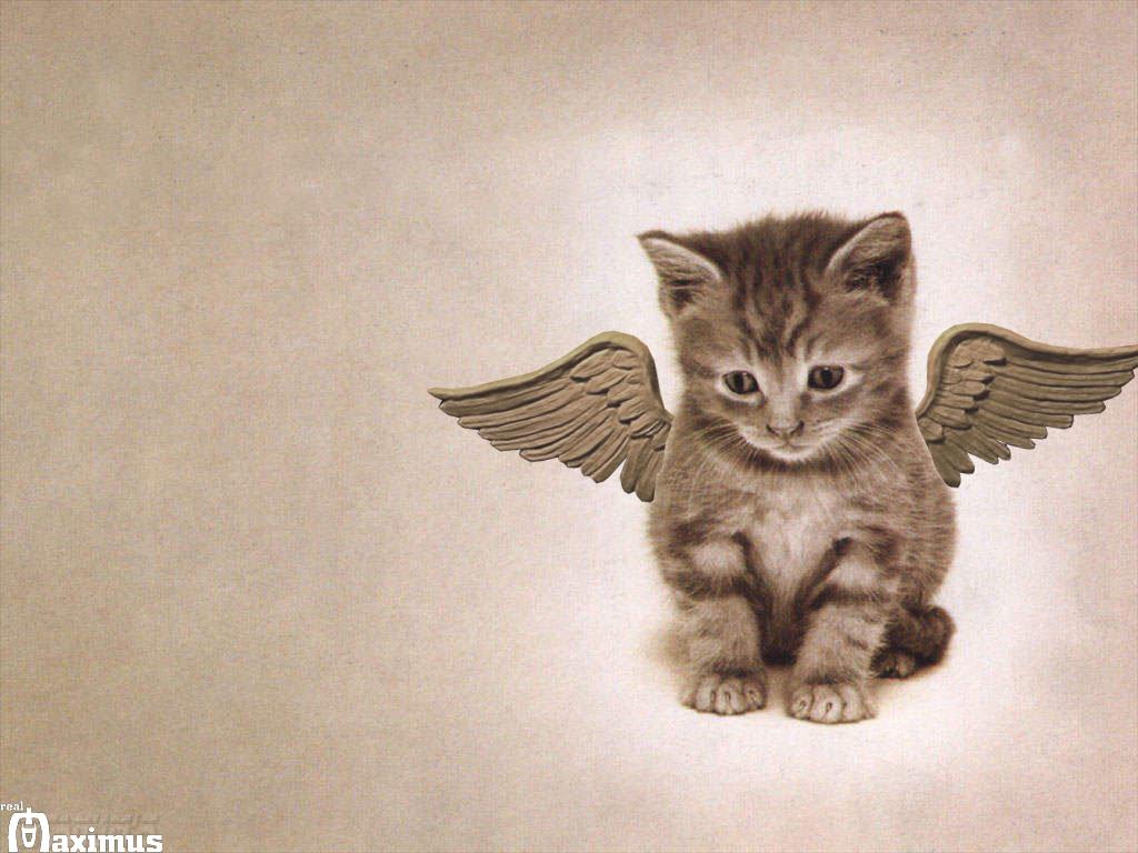 http://3.bp.blogspot.com/_tKIOEjO540w/TGH3fgJ5qqI/AAAAAAAAABY/QNncQu5djvQ/s1600/Cat-Wallpaper-cats-636603_1024_768.jpg
