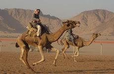 1ª Corrida de Camelos