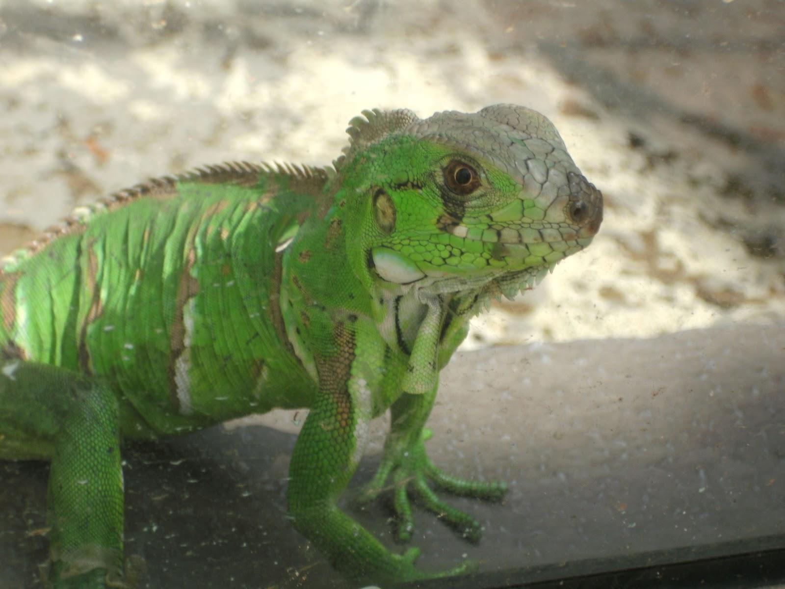 http://3.bp.blogspot.com/_tM9xxd6iQ5E/S9GZNyt6vvI/AAAAAAAAAHA/vH4fZ0A0Dkg/s1600/zoo+061.JPG