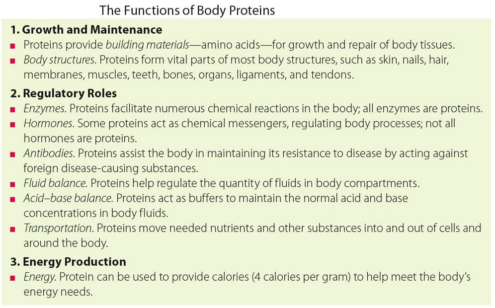 the role of protein in the human body Body proteins have highly specialized functions in the regulation of body processes for example, hemoglobin, an iron bearing protein that is the chief constituent of red blood cells performs a vital role in carrying oxygen to the tissues.