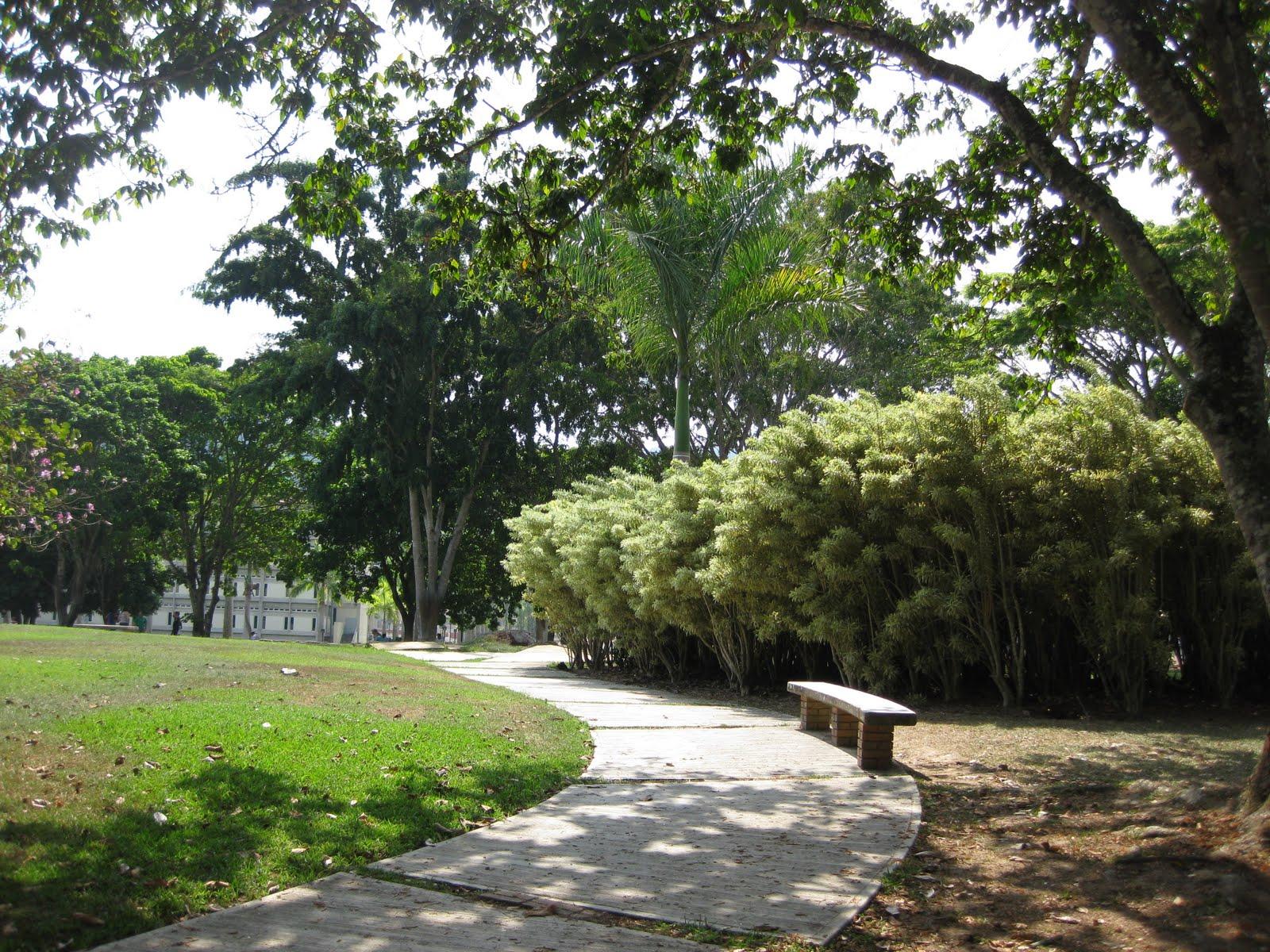 al aire libre paseo