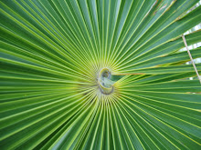 Palm leaf center