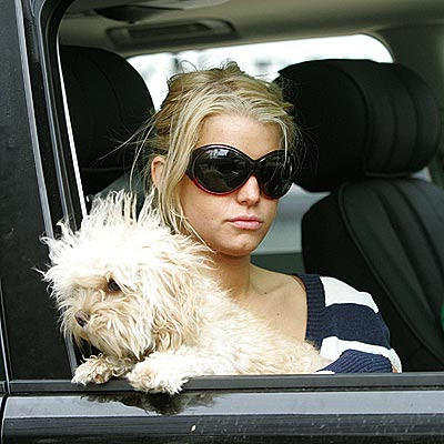 Jessica Simpson Dog Missing picture