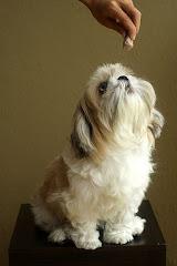 My dog Sunnie