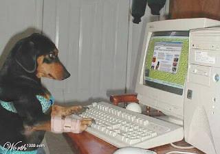 Cachorro com a patinha enfaixada usando o computador