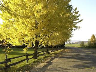 Árvore no outono