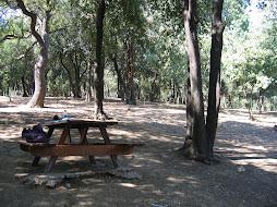 Yildiz Park, where I do my homework