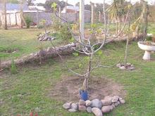 El árbol de Magdalena Junín
