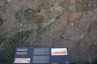 Vallcarca, talud de la edad paleozoica, Barcelona