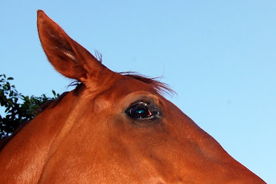 Pferdebilder Ausmalbilder - Malvorlagen Pferde 65 Ausmalbilder