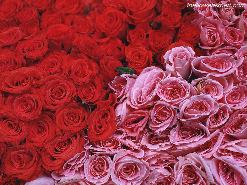 Valley of flowers best online flowers market different roses with