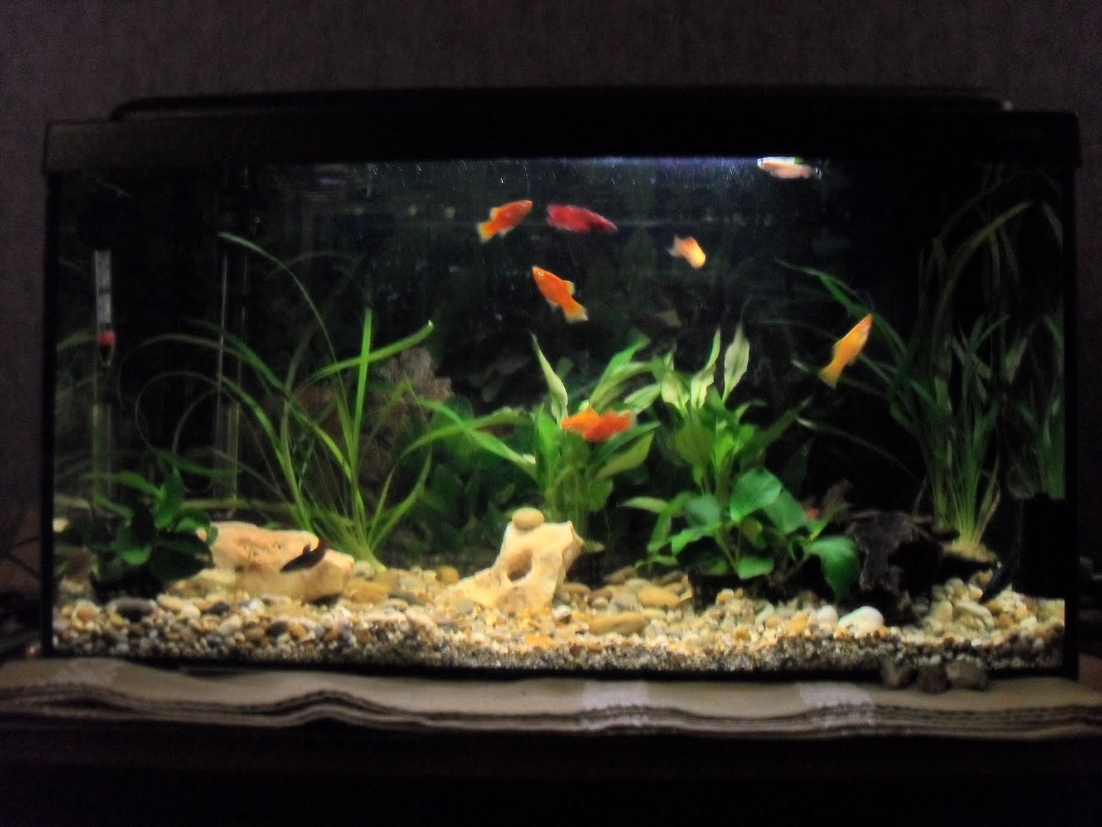 Kroax Blog Fish Tank
