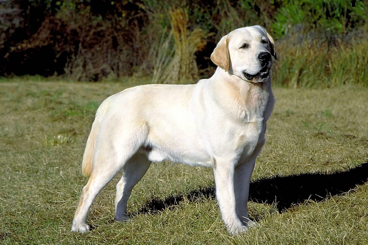 http://3.bp.blogspot.com/_tWqTtK72A2I/TD389aFydsI/AAAAAAAAI10/OEfQm6ie3KU/s1600/ss-090917-dogs-09_ss_full.jpg