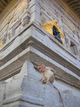 Monkey at Chamundi Hill