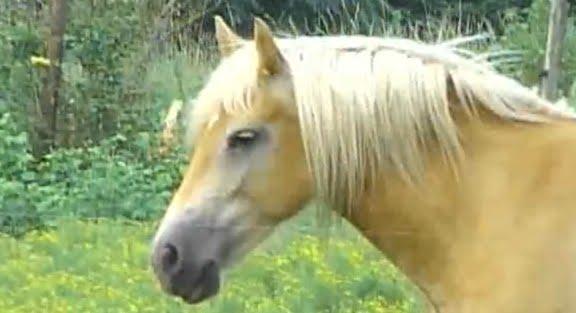 SC Man Sentences 3 Years In Prinson For Having Sex W/ Horse!