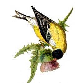 [birds-clip-arts.jpg]
