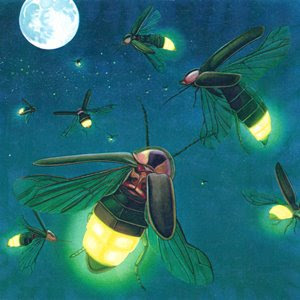 What Makes fireflies lit?