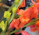 flower of the week