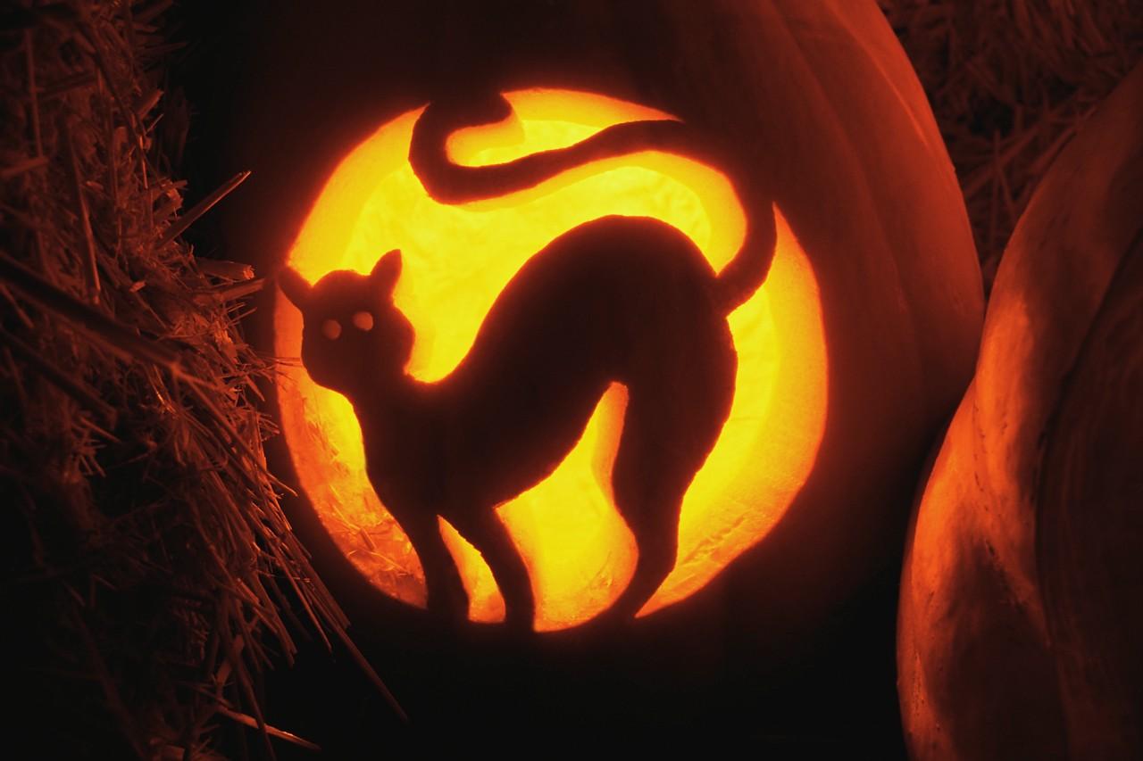 peterson cat portland