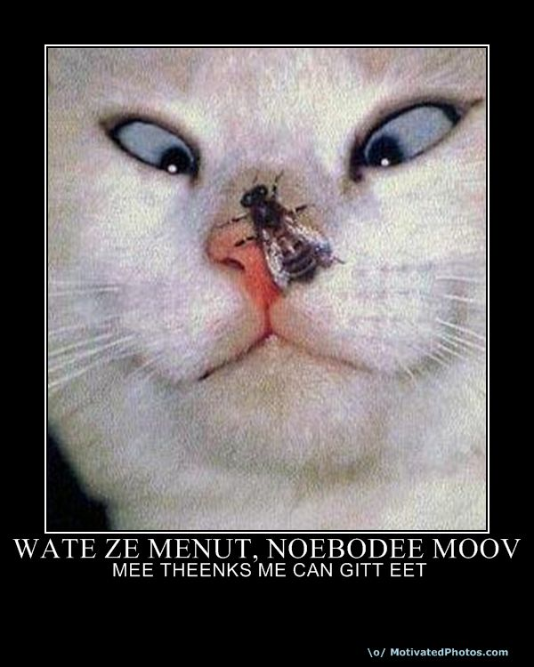 Wate Ze Menut Noebodee Moov