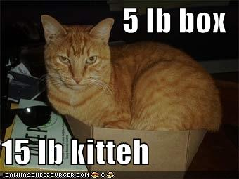 5 lb box 15 lb kitteh