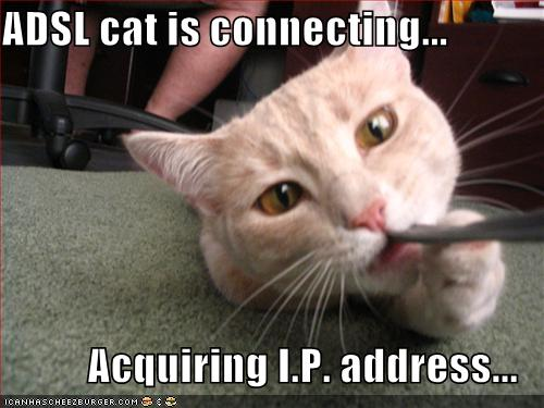 ADSL cat is connecting... Acquiring I.P. address...