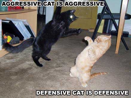 AGGRESSIVE CAT IS AGGRESSIVE DEFENSIVE CAT IS DEFENSIVE